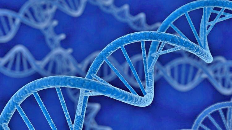Online Training Cancer Genomics Neural Networks vs k-NN Classifiers by Udemy